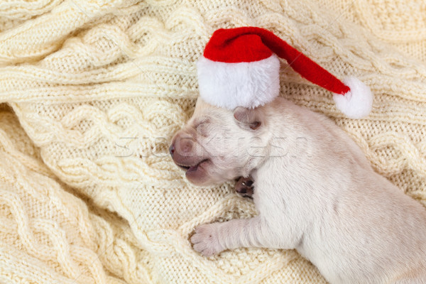 Newborn labrador puppy dog with santa hat sleeping Stock photo © ilona75