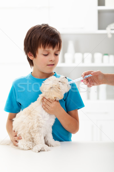 Boy at the veterinary doctor with his little doggy Stock photo © ilona75