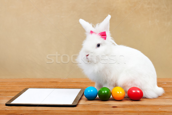 Easter bunny waiting for online orders Stock photo © ilona75