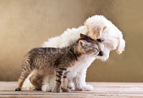 Friends - dog and cat together Stock photo © ilona75