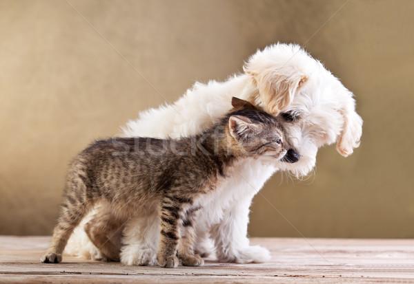 Barátok kutya macska együtt kis kutya szeretet Stock fotó © ilona75
