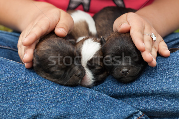 Young puppy dogs sleeping protectected Stock photo © ilona75
