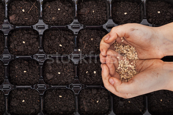 Hands holding spring seeds ready to sow Stock photo © ilona75