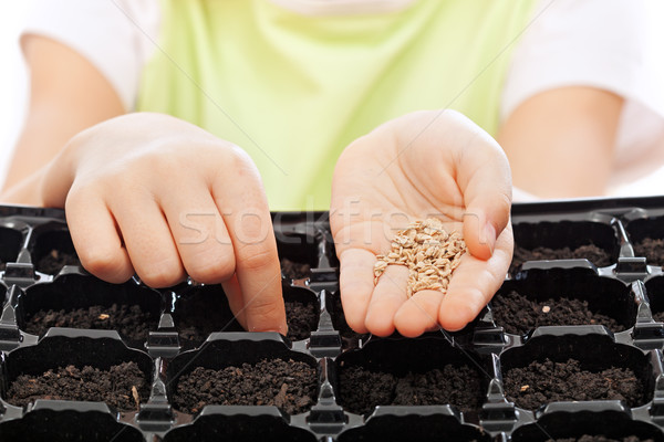 Child sowing seeds into germination tray Stock photo © ilona75