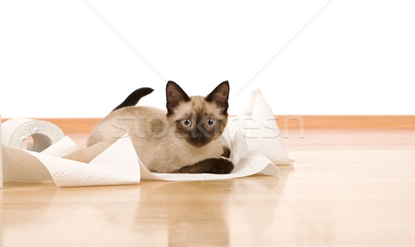 Kitten on the floor playing with a toilet paper roll Stock photo © ilona75