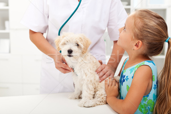 Little girl and her fluffy pet at the vet Stock photo © ilona75