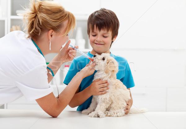 мальчика ветеринарный собака врач любви счастливым Сток-фото © ilona75