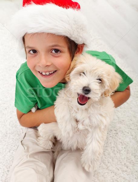 Meilleur Noël présents chiot chien Photo stock © ilona75