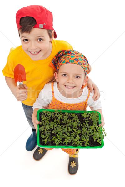 Kids growing their own food Stock photo © ilona75