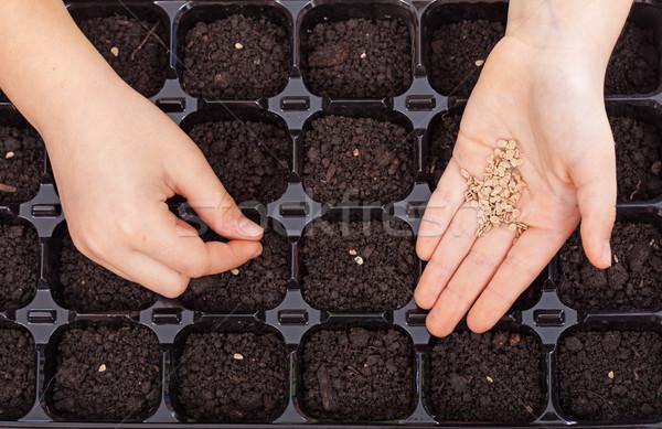 Kind handen zaden dienblad voorjaar zaaien Stockfoto © ilona75