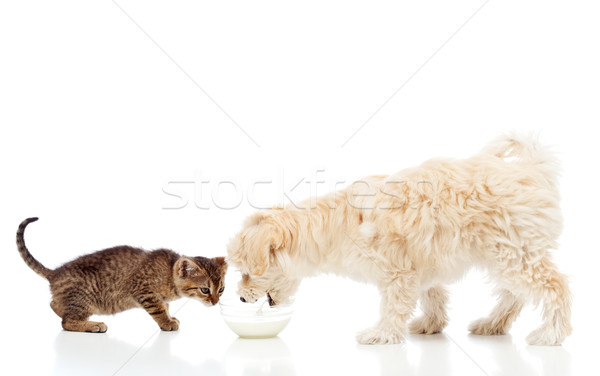 Buddies at the feeding bowl - dog and cat eating Stock photo © ilona75