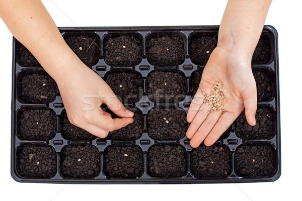 Fiatal kezek vetés zöldség magok tálca Stock fotó © ilona75