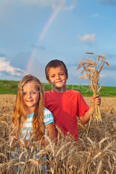 Kids in wheat field at harvest time Stock photo © ilona75