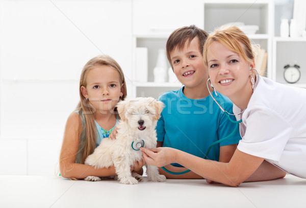 Kids taking their pet to the veterinary Stock photo © ilona75