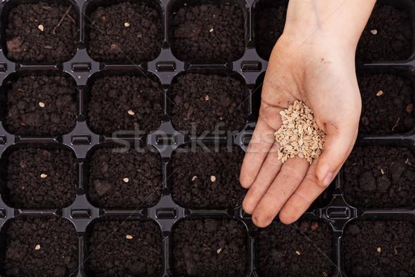 Stockfoto: Hand · zaden · dienblad · voorjaar · zaaien