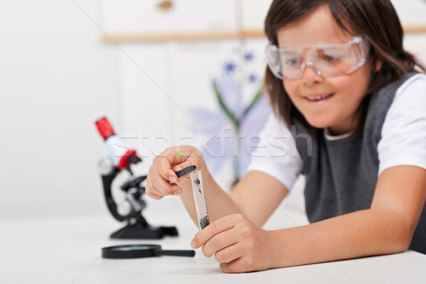 Young boy study plant in biology class Stock photo © ilona75