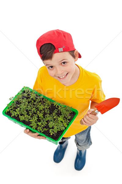 Happy boy ready to plant spring seedlings Stock photo © ilona75