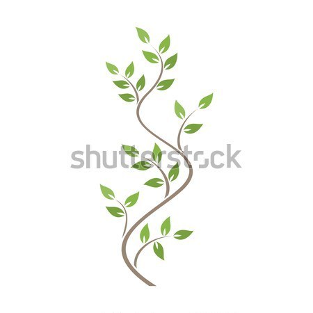 Natural ornamentation with green ivy on white background Stock photo © Imaagio