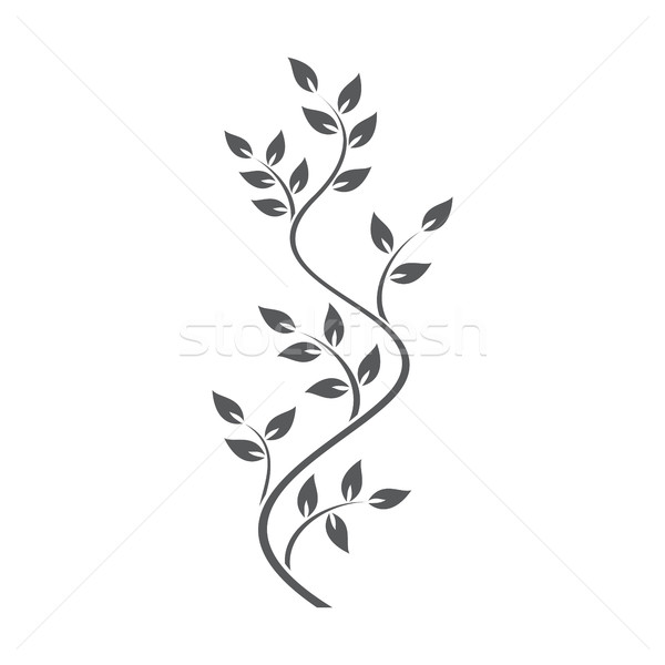 Natural ornamentation with ivy on white background Stock photo © Imaagio