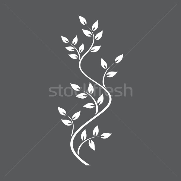 Natural ornamentation with ivy on dark background Stock photo © Imaagio
