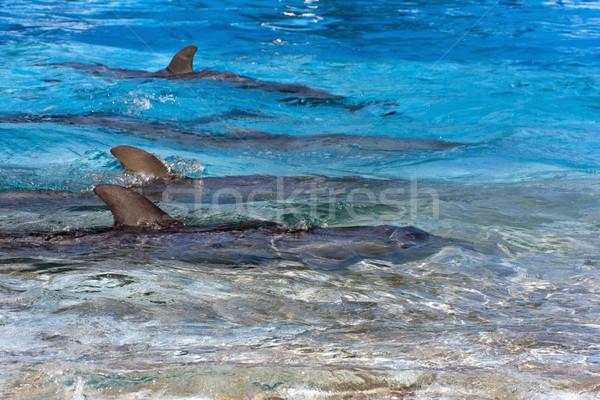 Yunuslar yüzey su vücut deniz çift Stok fotoğraf © Imagecom