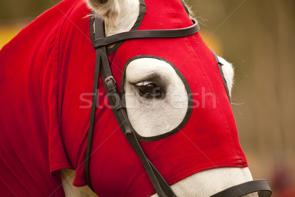 Kırmızı at kafa savaş şövalye spor Stok fotoğraf © Imagecom