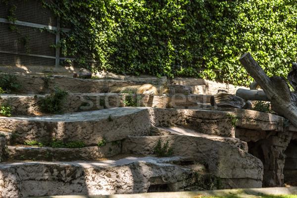 Stock fotó: Oroszlán · alszik · állatkert · Barcelona · kint · vízszintes