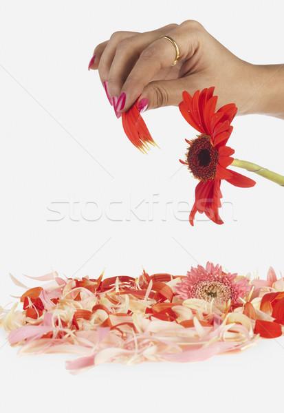 Mão pétalas amor depressão esperança close-up Foto stock © imagedb