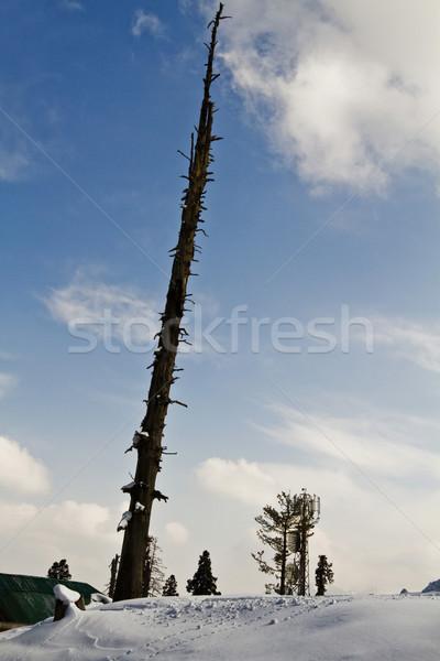 枯れ木 雪 カバー 丘 ツリー 風景 ストックフォト © imagedb