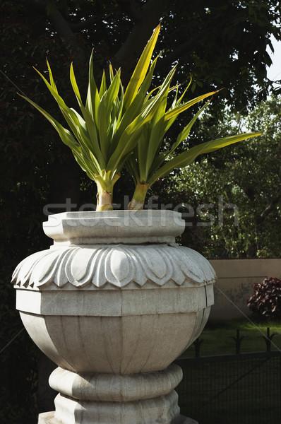 растений урна саду Нью-Дели Индия завода Сток-фото © imagedb