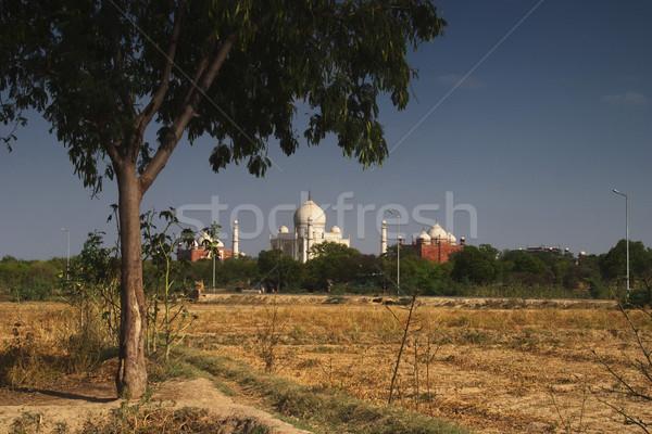 Mező mauzóleum Taj Mahal fa fehér torony Stock fotó © imagedb