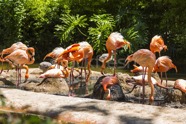 Flock of flamingos in a zoo Stock photo © imagedb