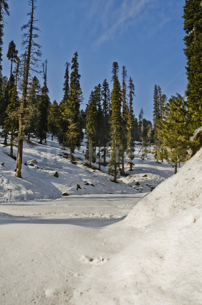 Snow covered valley in winter, Gulmarg, Jammu And Kashmir, India Stock photo © imagedb