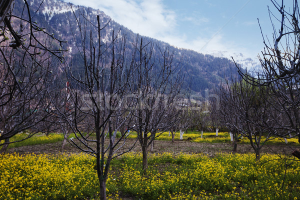 Hardal alanları dağlar ağaç manzara kar Stok fotoğraf © imagedb