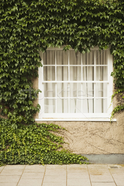 дома покрытый плющ Оксфорд Оксфордшир Англии Сток-фото © imagedb