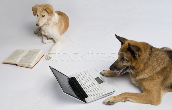 Perro usando la computadora portátil otro lectura libro ordenador Foto stock © imagedb