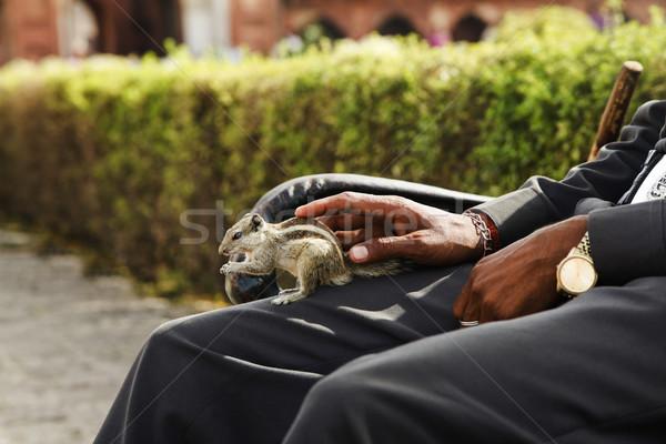 Férfi mókus ül pad park törődés Stock fotó © imagedb