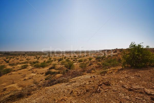 Bush growing at arid landscape, Jaisalmer, Rajasthan, India Stock photo © imagedb
