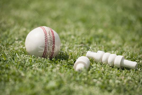 Primo piano cricket palla erba sport bianco Foto d'archivio © imagedb