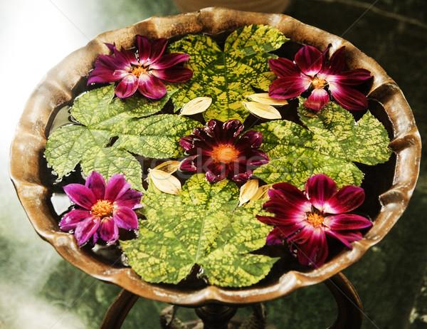 Foglie fiori quartiere fiore foglia cerchio Foto d'archivio © imagedb