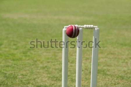 Cricket bal gras hout fotografie bol Stockfoto © imagedb