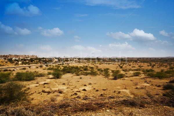 Bokor növekvő tájkép város égbolt sivatag Stock fotó © imagedb