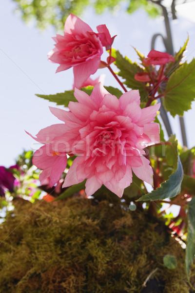 pims_20100608_ml0430.jpg Stock photo © imagedb