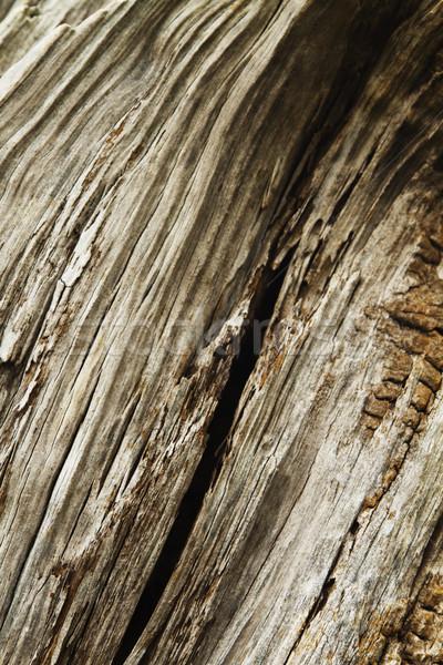 Részlet fatörzs fa minta erdő ugatás Stock fotó © imagedb