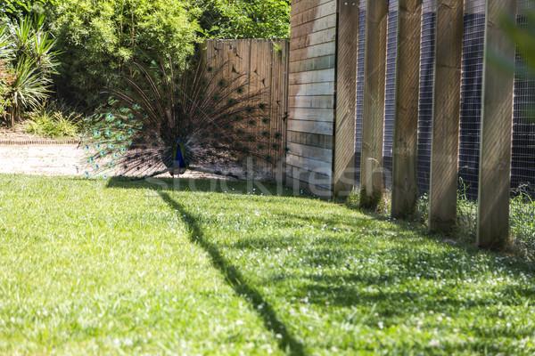 男性 インド 羽 バルセロナ 動物園 羽毛 ストックフォト © imagedb