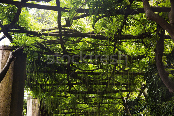 Tree canopy Stock photo © imagedb
