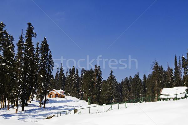 Ağaçlar kar kapalı tepe Hindistan gökyüzü Stok fotoğraf © imagedb