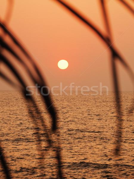 Naplemente tenger levelek Goa India égbolt Stock fotó © imagedb