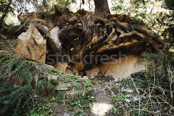 Alulról fotózva kilátás gyökerek fa erdő természet Stock fotó © imagedb