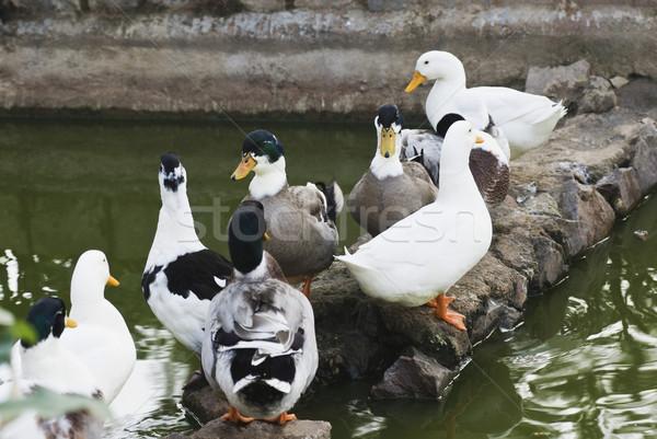 クローズアップ 池 ニューデリー インド 水 壁 ストックフォト © imagedb